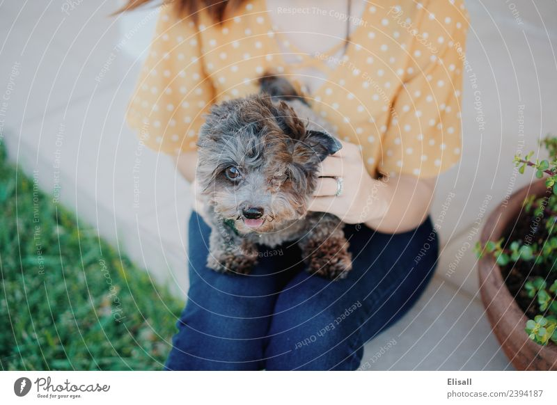 Woman with pet dog Lifestyle Human being Young woman Youth (Young adults) Adults Mother 1 18 - 30 years Animal Pet Dog Happiness Enthusiasm Relationship Spring