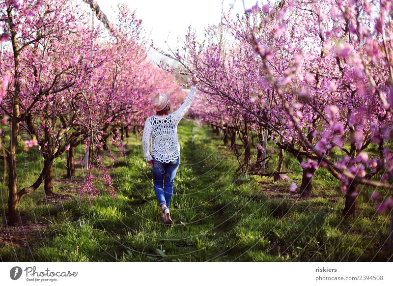 in love with the peaches iii Human being Feminine Woman Adults Life 1 30 - 45 years Environment Nature Spring Beautiful weather Peach blossom Garden Discover