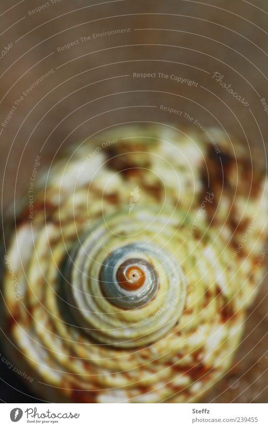 Natural symmetry natural symmetry Snail shell Spiral Symmetry Maritime symmetric primal form symmetrical shape Evolution in proportion Near Proportional