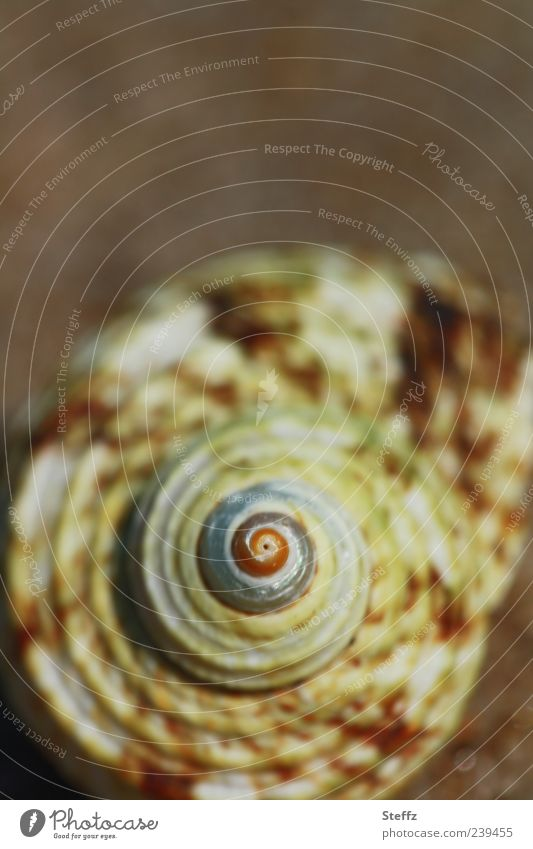Natural symmetry Snail shell Beach Spiral Maritime natural symmetry naturally Symmetry symmetric Brown Mussel Vacation mood Mussel shell Shell-shaped Discovery