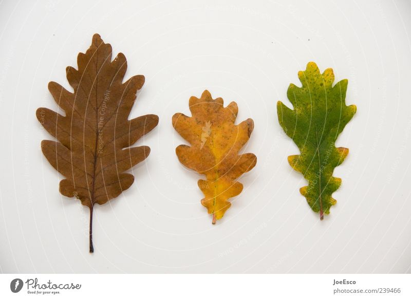 #239466 Leaf Natural Beautiful Nature Autumn Autumn leaves Autumnal Early fall Isolated Image Botany Old Transience Decline Colour photo Interior shot Deserted