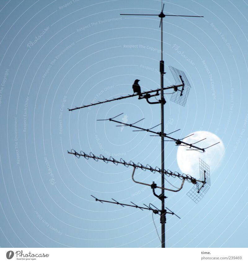 Sky Animal Metal Bird Esthetic Technology Moon Antenna Broacaster Blackbird