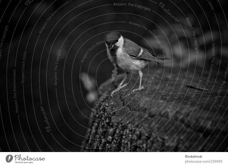 Animal Bird Wild animal Stand Sparrow Black & white photo