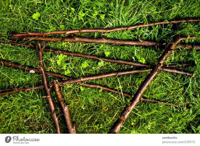 Green Plant Meadow Grass Lie Growth Branch Lawn Twig Muddled Stick Juicy Twigs and branches Leaf green Consecutively