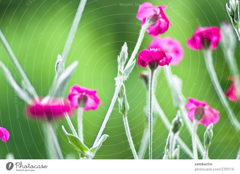 Nature Green Plant Summer Flower Leaf Environment Blossom Climate Growth Blossoming Flower meadow Blossom leave Dianthus