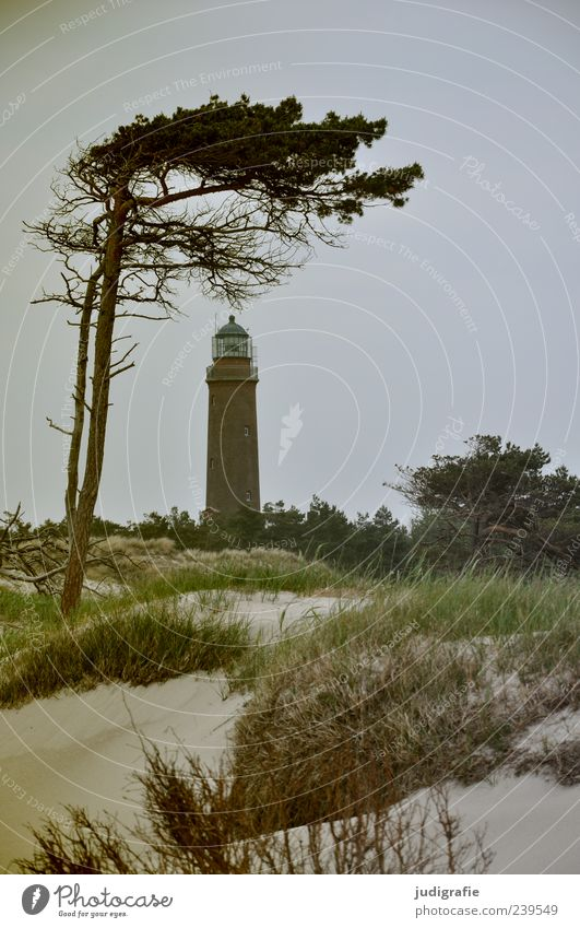 Darß Place Environment Nature Landscape Plant Sky Tree Grass Coast Beach Baltic Sea Ocean darßer place Darss Prerow Lighthouse Natural Wild Moody Wind cripple