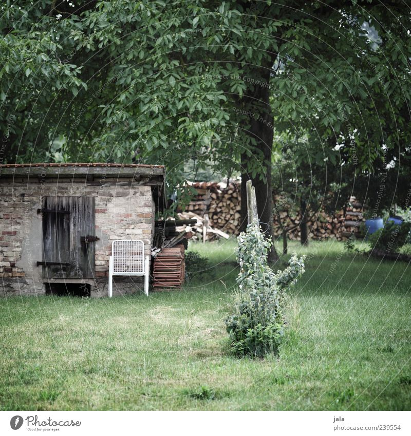 garden Chair Nature Plant Tree Grass Bushes Foliage plant Wild plant Garden Meadow Hut Manmade structures Building Green Colour photo Exterior shot Deserted Day