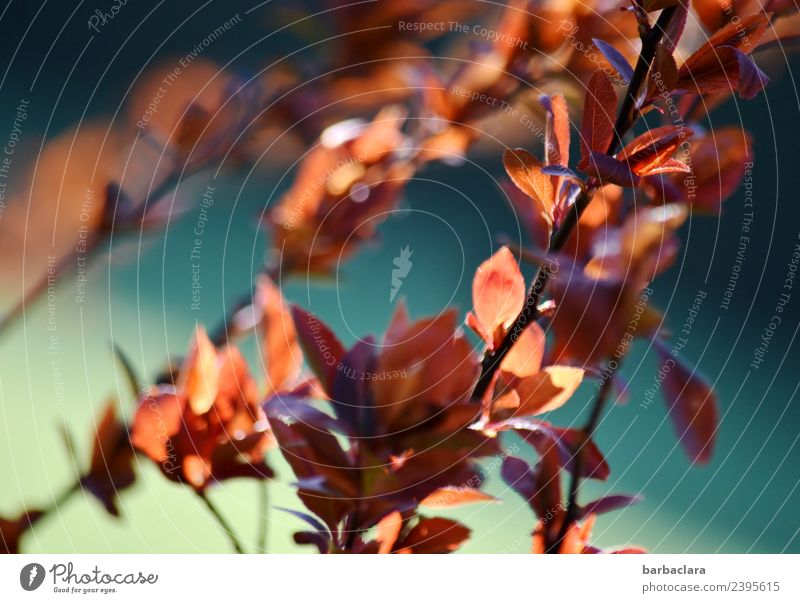 Seasons: spring awakening Nature Plant Sun Spring Climate Bushes Leaf Garden Illuminate Warmth Blue Red Moody Spring fever Anticipation Colour Environment