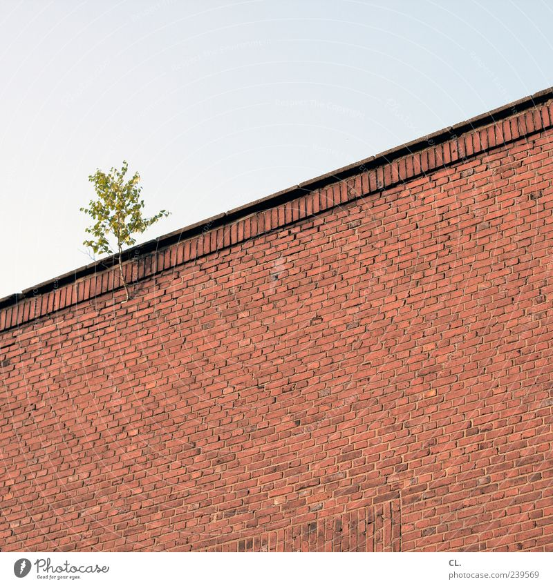 Sky Nature Plant Tree Leaf Environment Wall (building) Wall (barrier) Building Growth Gloomy Individual Branch Twig Foliage plant Wild plant