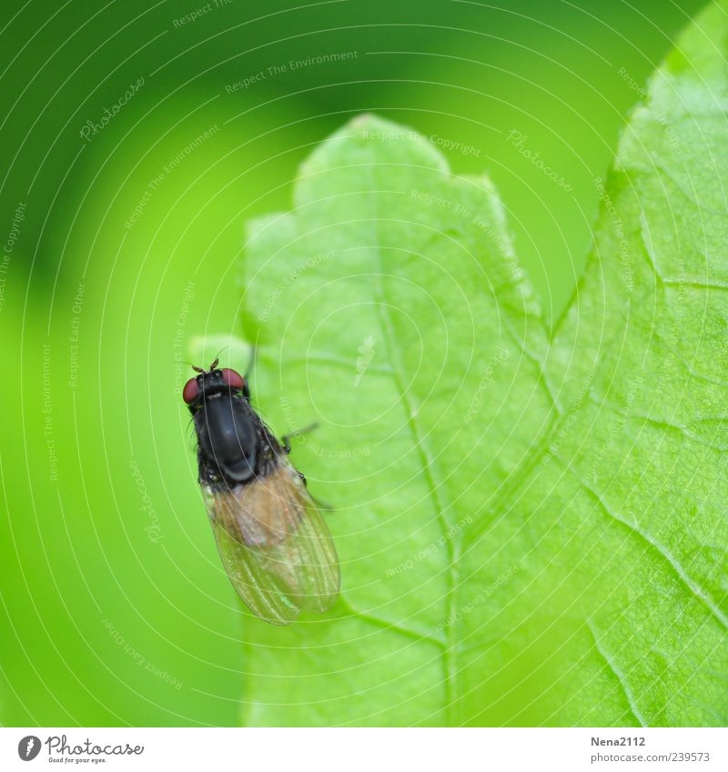 Discover borders Nature Spring Summer Plant Leaf Animal Fly 1 Small Green Insect Rachis Colour photo Exterior shot Close-up Macro (Extreme close-up) Deserted
