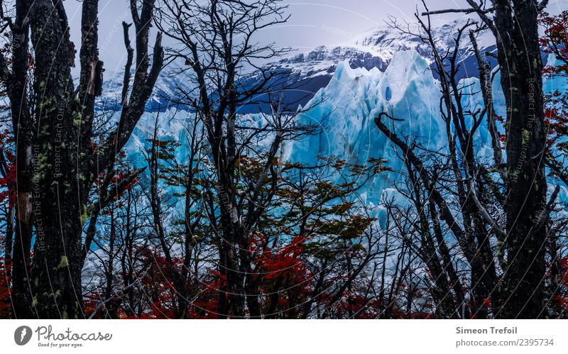 Perito Moreno II Tourism Adventure Far-off places Freedom Expedition Winter Argentina Landscape Elements Autumn Ice Frost Snow Tree Forest Mountain Patagonia