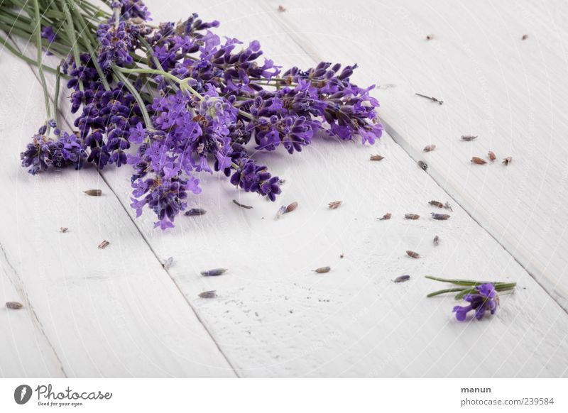 lavender Herbs and spices Medicinal plant Healthy Fragrance Table Wooden table Nature Plant Flower Blossom Agricultural crop Lavender Summerflower Flower stem