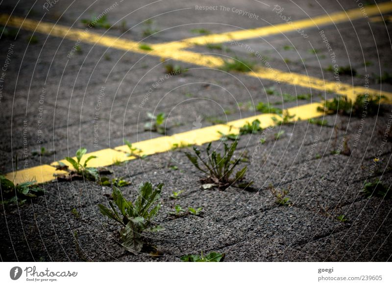...place Plant Weed Transport Parking lot Paving stone Stone Concrete Line Yellow Green Colour photo Exterior shot Deserted Shallow depth of field