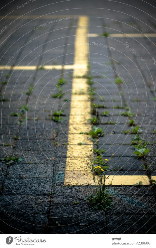 parkic Weed Transport Parking lot Paving stone Stone Concrete Line Yellow Green Colour photo Exterior shot Deserted Shallow depth of field Foliage plant Growth