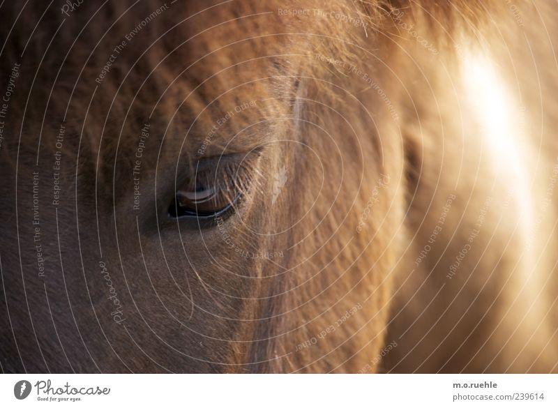 Animal Eyes Natural Wild Horse Soft Pelt Trust Animal face Pet Animalistic Pony Eyelash Mane Horse's head