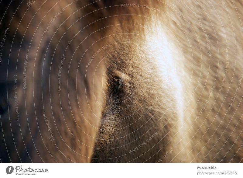 Animal Wild Horse Soft Pelt Pet Animalistic Pony Pattern Be confident