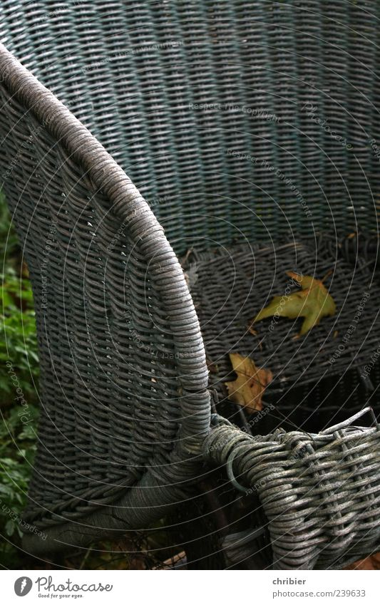 Old Leaf Autumn Gray Broken Gloomy Derelict Decline Autumn leaves Seating Armchair Throw away Bulk rubbish Cane chair