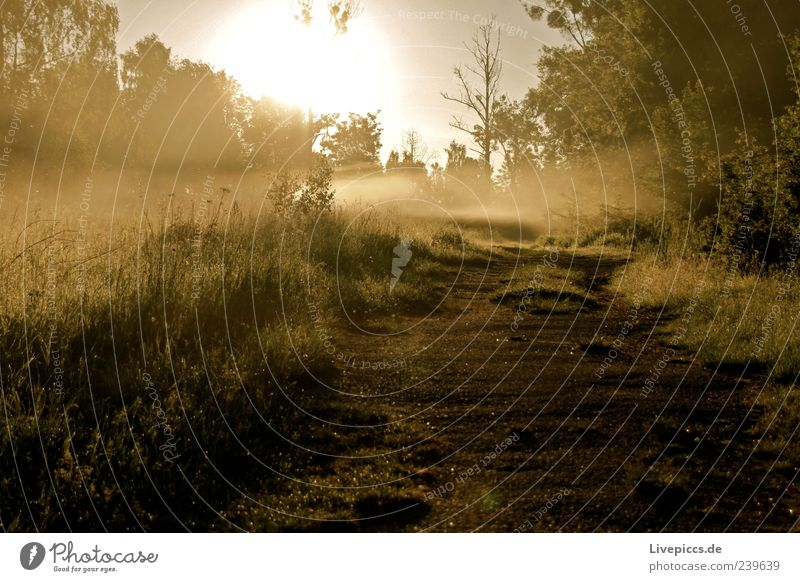 Milli Fog Nature Sunrise Sunset Tree Grass Bushes Sand Wood Yellow Green Moody Colour photo Exterior shot Deserted Morning Sunlight Central perspective Forward
