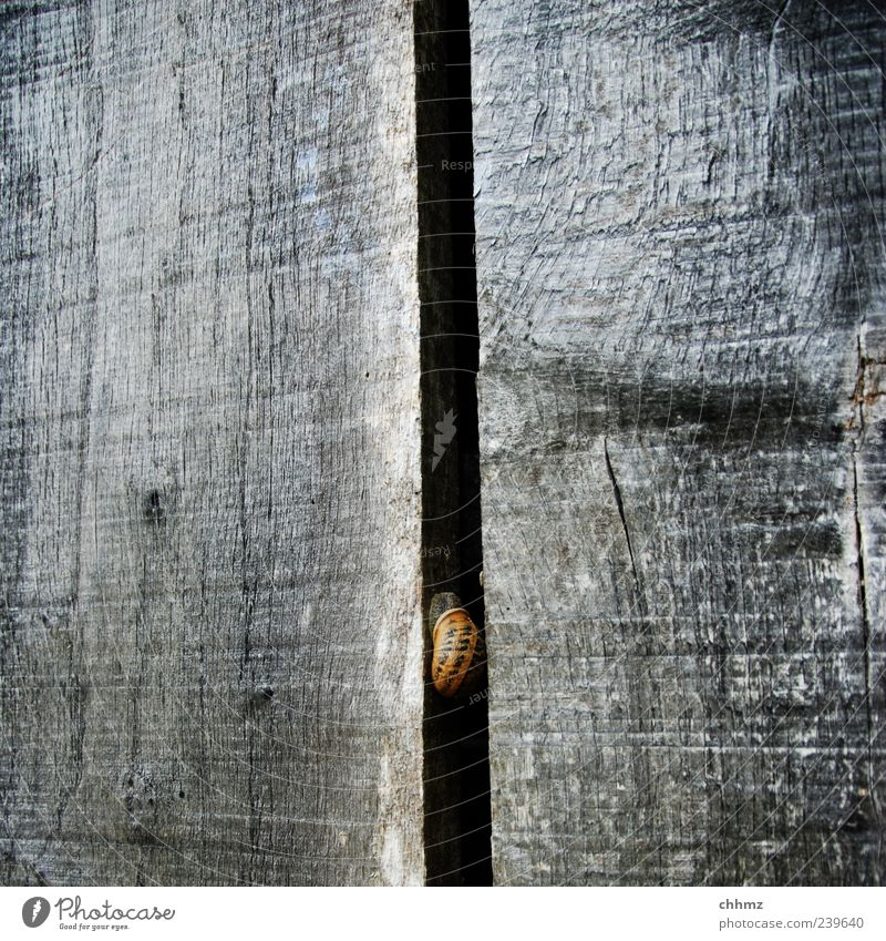 snail Facade Animal Snail 1 Wood Relaxation Crouch Gray Loneliness Snail shell Seam Column Slit Protection Vertical Weathered Break Restful Bleached Wood grain