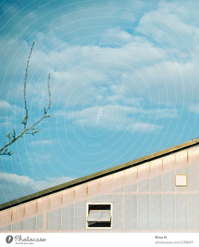 Beautiful weather Sky Clouds House (Residential Structure) Building Bright Blue Window Twigs and branches Roof Surrealism Colour photo Exterior shot Deserted