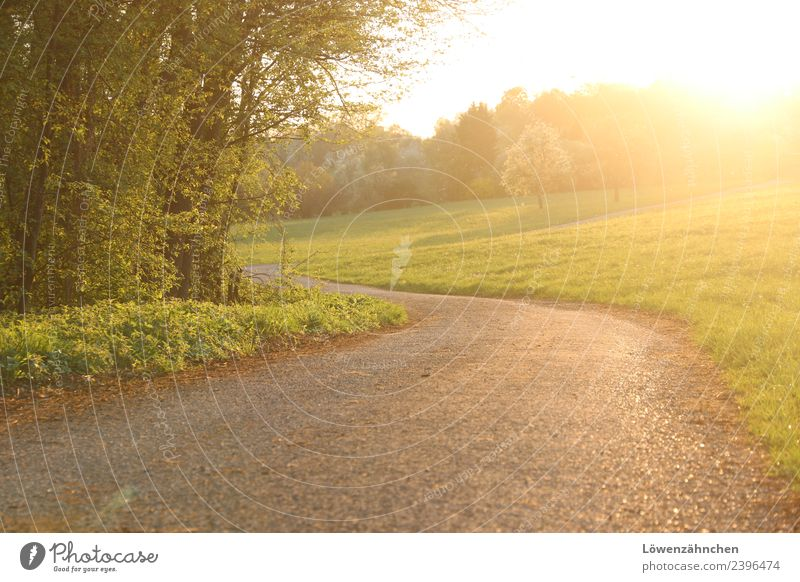 walk in golden light Beautiful weather Tree Grass Forest Fruittree meadow Street Lanes & trails Free Bright Natural Warmth Yellow Gold Green Moody