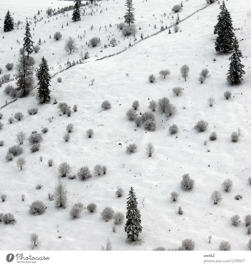 Nature Blue White Tree Plant Winter Black Forest Far-off places Environment Landscape Cold Snow Mountain Bright Ice