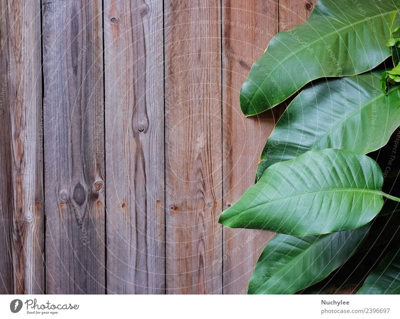 green leaves on wooden background texture Nature Old Plant Summer Beautiful Green White Tree Leaf Architecture Spring Natural Wood Art Garden Brown