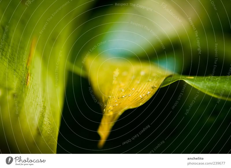 leaf yellow Environment Nature Plant Leaf Foliage plant Dirty Thin Dry Yellow Green Black Calm Dust Lie Background picture Fine particles Shriveled Blur