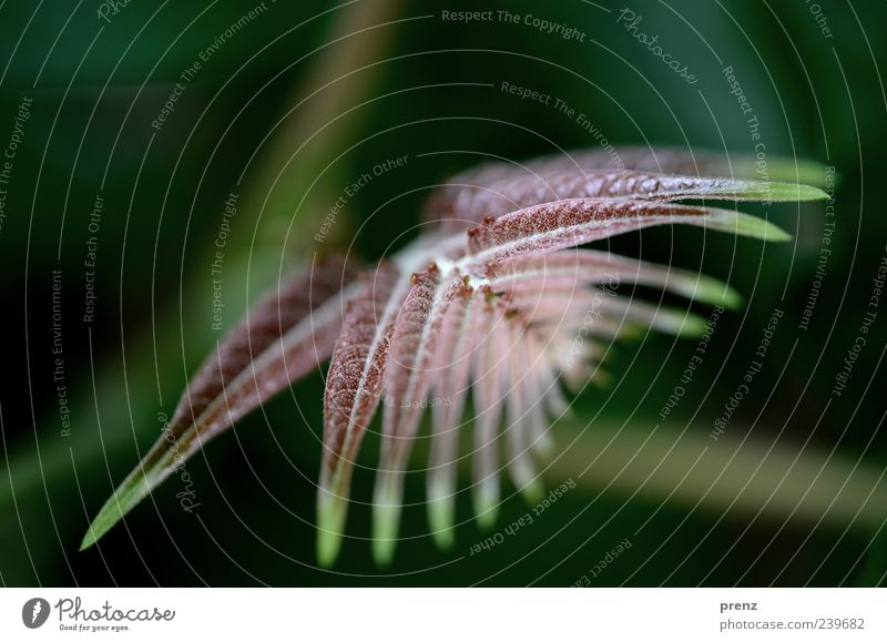 floral motif Nature Plant Brown Green Twig Leaf Fresh Bushes Arch Line Colour photo Exterior shot Deserted Day Shallow depth of field Structures and shapes