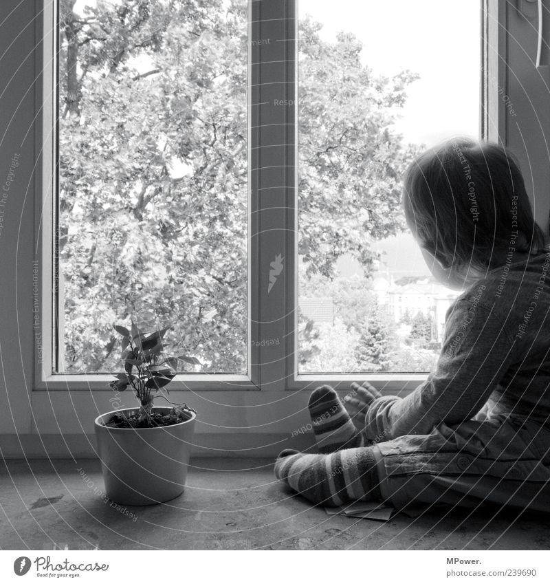 Child White Tree Girl Flower Loneliness Black Window Boy (child) Gray Small Sadness Observe Vantage point Discover Dreamily