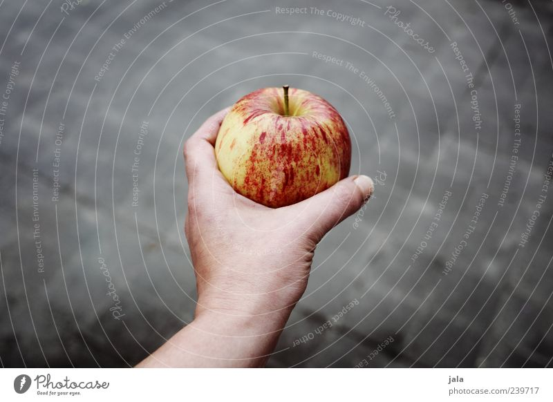 one apple Food Fruit Apple Nutrition Organic produce Vegetarian diet Human being Woman Adults Hand 1 Healthy Good Delicious Gray Red Offer Colour photo