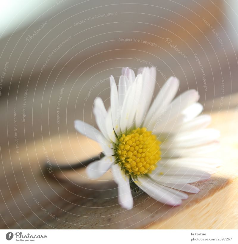 little flowers Nature Plant Spring Flower Blossom Garden Meadow Blossoming Exceptional Natural Beautiful Yellow White Environment Colour photo Multicoloured