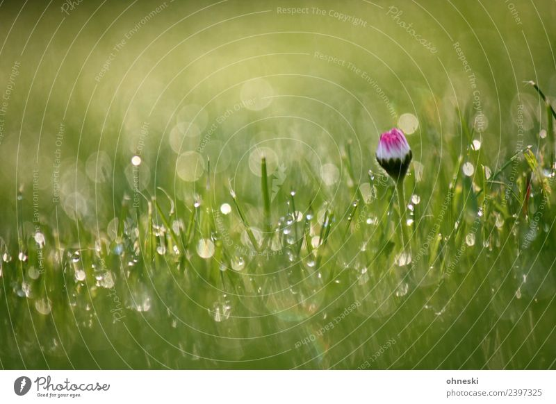 daisies Plant Drops of water Spring Summer Flower Grass Daisy Garden Meadow Joie de vivre (Vitality) Spring fever Peaceful To console Grateful Attentive Patient