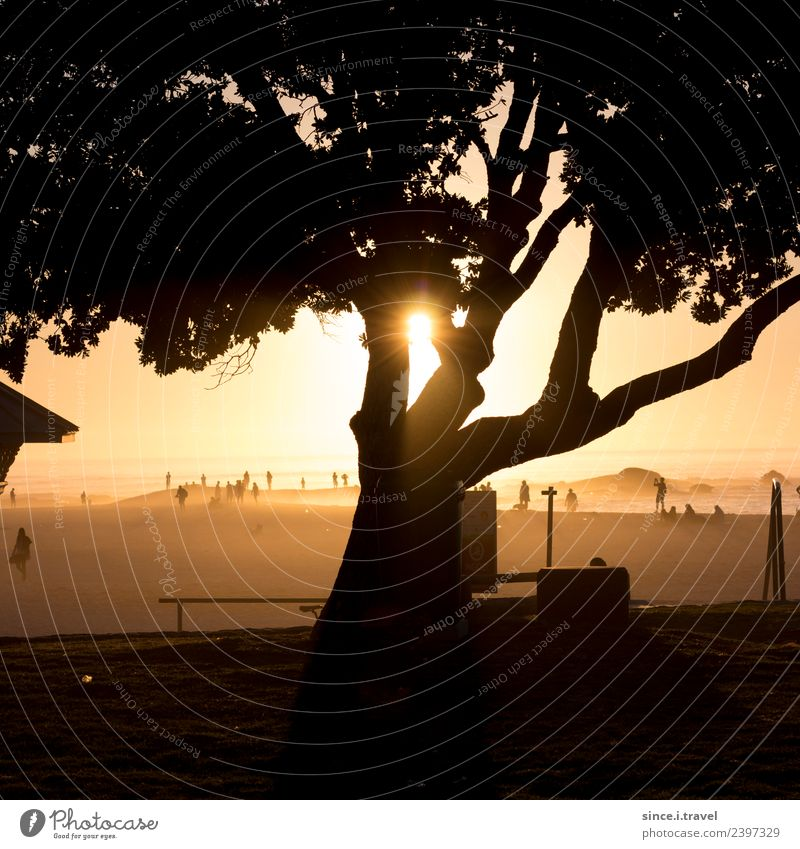 Tree shadow at sunset on the beach in Cape Town Tourism Adventure Far-off places Summer Sun Nature Landscape Plant Elements Sand Air Water Beautiful weather