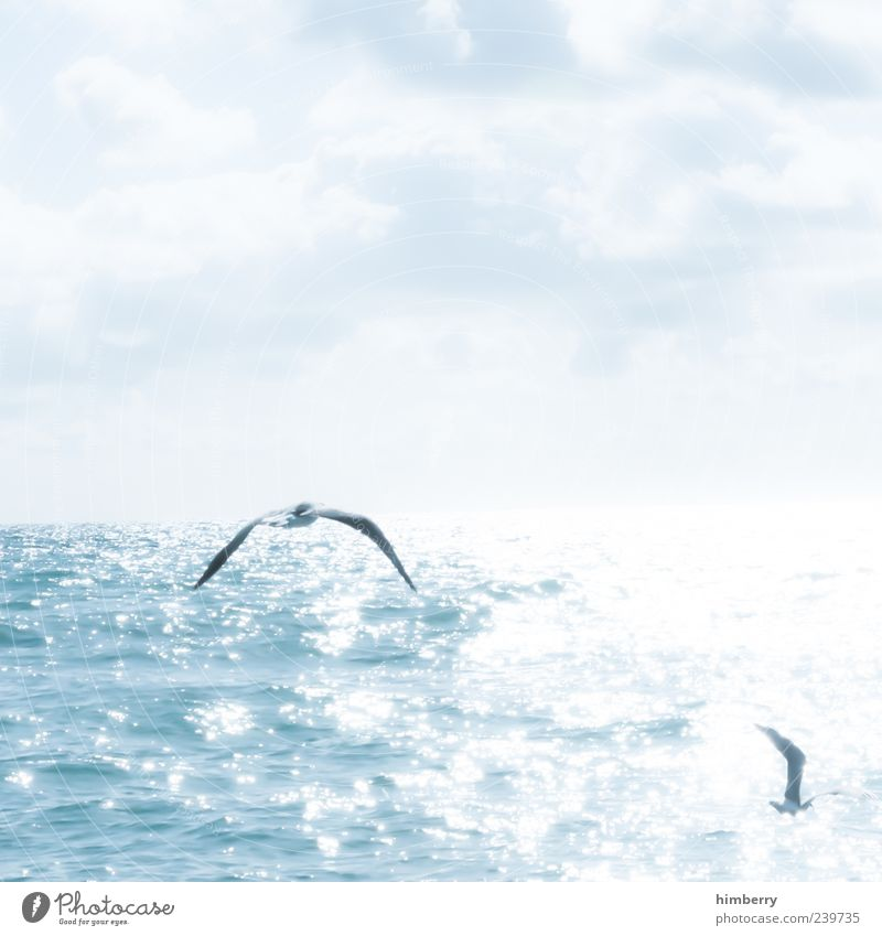 Sky Nature Vacation & Travel Summer Ocean Relaxation Far-off places Environment Freedom Bird Wing Seagull Well-being Reflection Back-light Flight of the birds