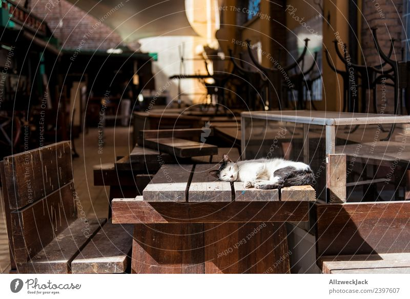 Cat lying on the table of a closed bar Cuba Havana Pet Domestic cat Sunbathing Lie Sleep Doze Relaxation Break Restful Bar Wooden table Closing time To enjoy