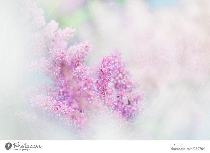 """hach""-soft. Nature Plant Spring Summer Flower Blossom Summerflower Authentic Fragrance Bright Kitsch Beautiful Pink White Spring fever Esthetic Elegant"