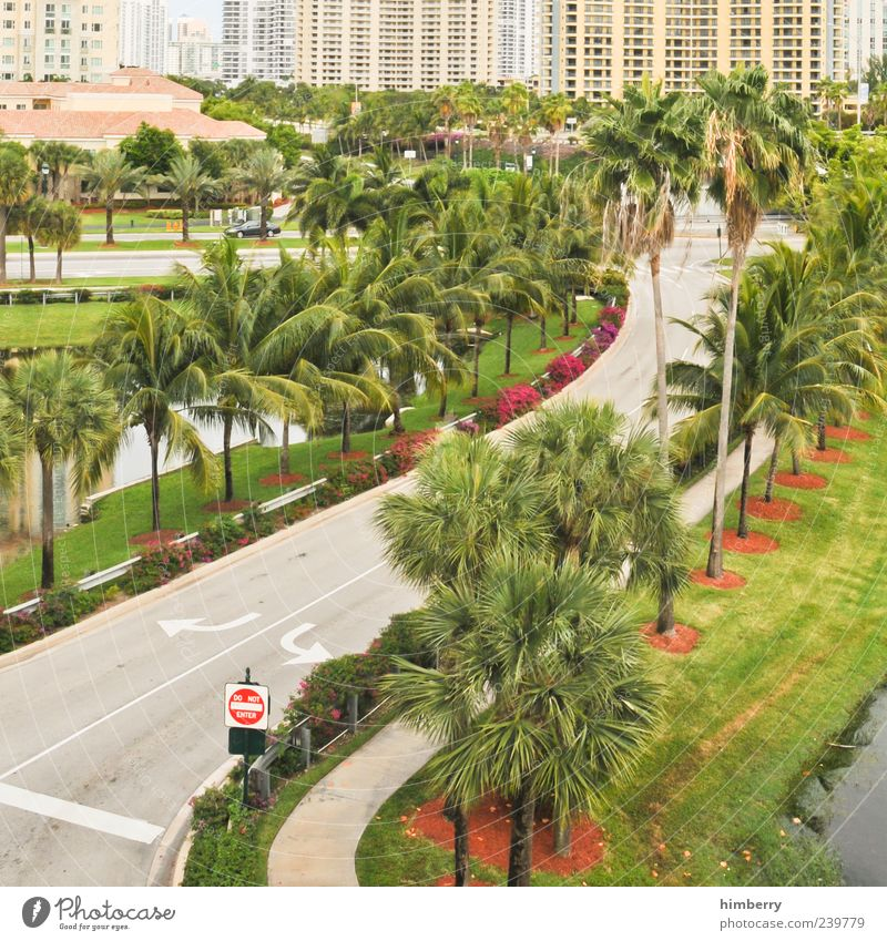 Nature City Plant House (Residential Structure) Environment Street Meadow Lanes & trails Signs and labeling Transport Arrow Traffic infrastructure Palm tree