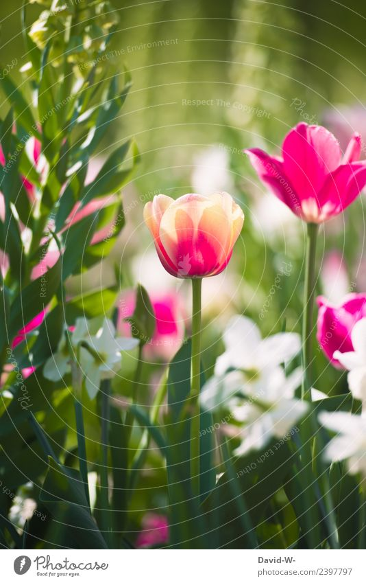 Nature Summer Plant Beautiful Green Landscape Flower Red Environment Spring Emotions Art Exceptional Pink Dream Weather