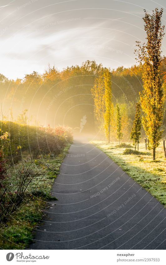 Away with morning haze and sunrise Sports Jogging Closing time Environment Nature Landscape Sky Sunrise Sunset Spring Summer Beautiful weather Fog Plant Tree