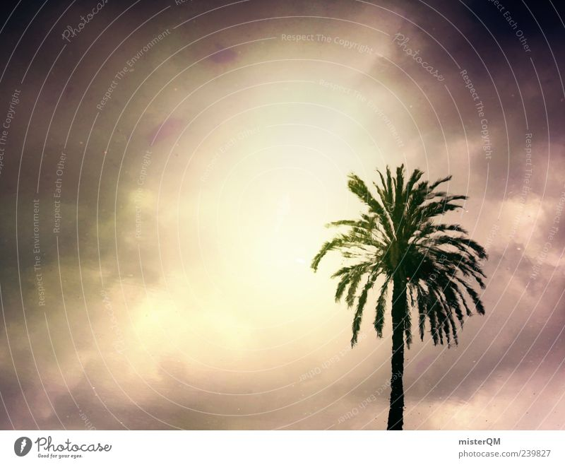 Paradise Lost. Esthetic Palm tree Palm frond Storm Vacation & Travel Vacation photo Vacation mood Dark Mysterious Fantastic Enchanting Surrealism Abstract