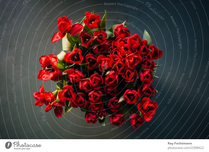 A bouquet of red tulips Elegant Harmonious Decoration Valentine's Day Mother's Day Plant Spring Summer Flower Tulip Leaf Blossom Bouquet Blossoming Illuminate