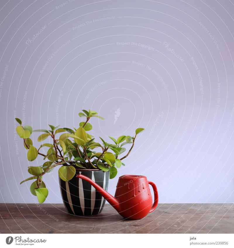 favourite plant Plant Foliage plant Pot plant Houseplant Watering can Esthetic Beautiful Colour photo Interior shot Deserted Copy Space right Copy Space top