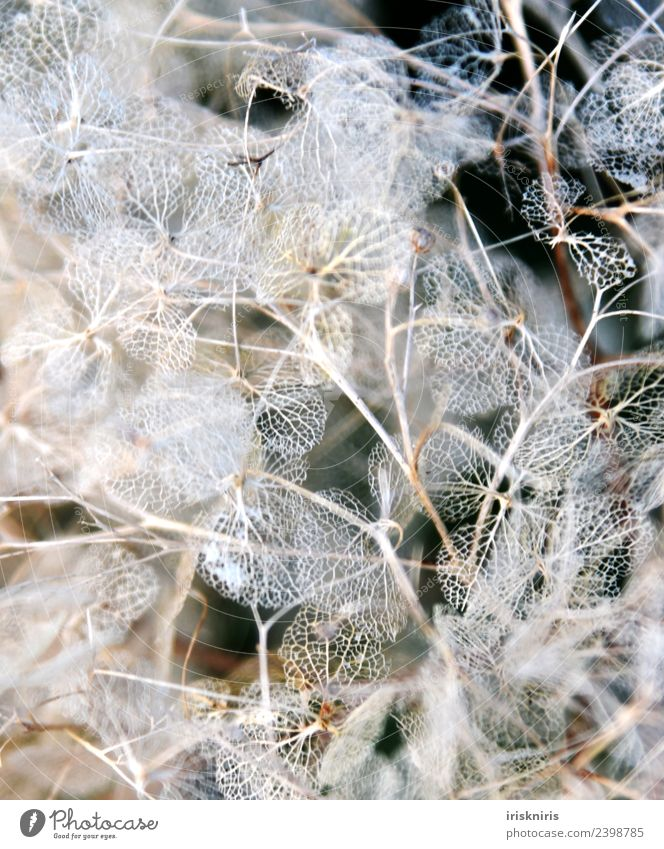 Nature Old Plant Flower Winter Environment Spring Garden Growth Bushes To fall Dry Derelict To dry up