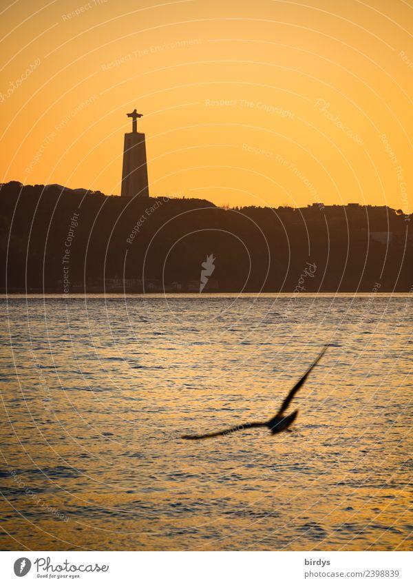 Cristo Rei, Lisbon Vacation & Travel City trip Sculpture Cloudless sky Sunrise Sunset River Tejo Tourist Attraction Landmark Monument Wild animal Seagull 1
