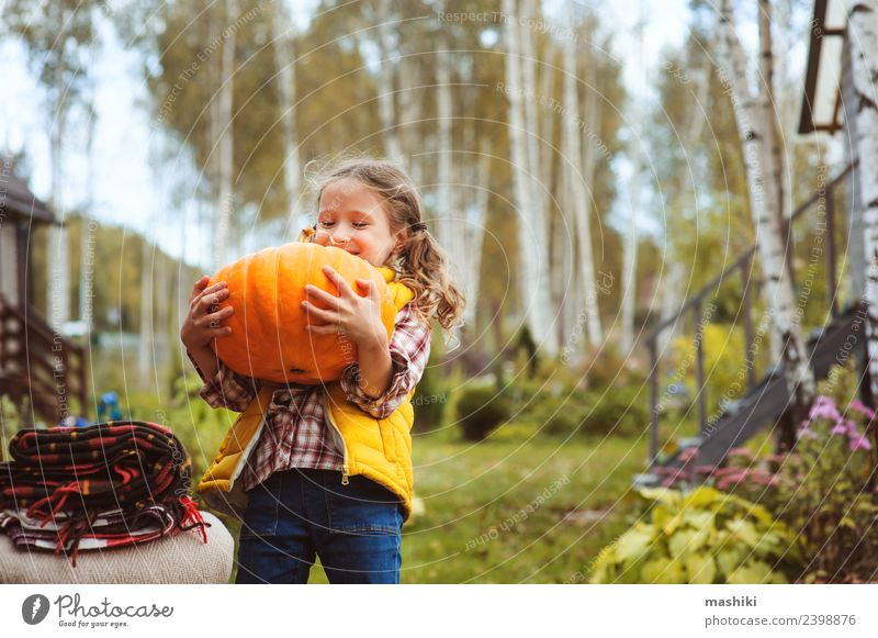 child girl picking pumpkins on the farm Vegetable Playing House (Residential Structure) Garden Chair Hallowe'en Child Autumn Warmth Fresh Funny fall Harvest