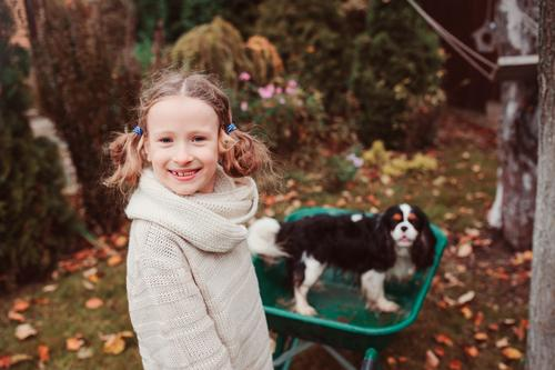 happy child girl riding her dog in wheelbarrow Lifestyle Joy Playing Garden Child Friendship Infancy Autumn Weather Leaf Sweater Pet Dog Happiness fall