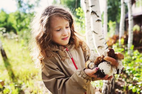 child girl picking wild mushrooms Child Girl 8 - 13 years Infancy Nature Plant Summer Autumn Tree To enjoy Hunting Smiling Walking Mushroom picker Forest