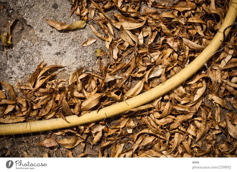 great aridity Garden Gardening Summer Climate Drought Garden hose Lie Old Dirty Hot Long Retro Gloomy Dry Brown Yellow Environment Transience Change
