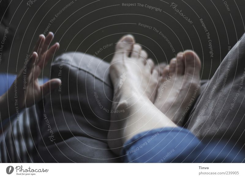 Hand Relaxation Feet Lie Fingers Break Sofa Cozy Barefoot Toes Grasp Cushion Restful Scare Wake Disruptive element